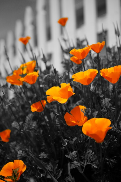 Selective Color Use In Black And White Photography