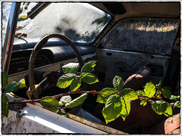 Steering Wheel with Vines