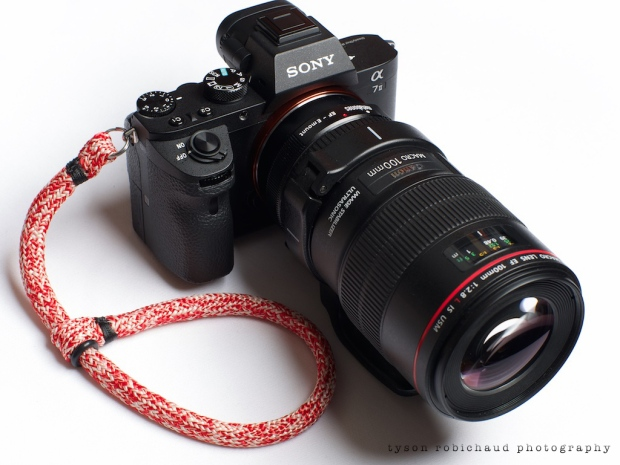 Canon EF Macro 100mm f/2.8 L IS USM on Sony a7II