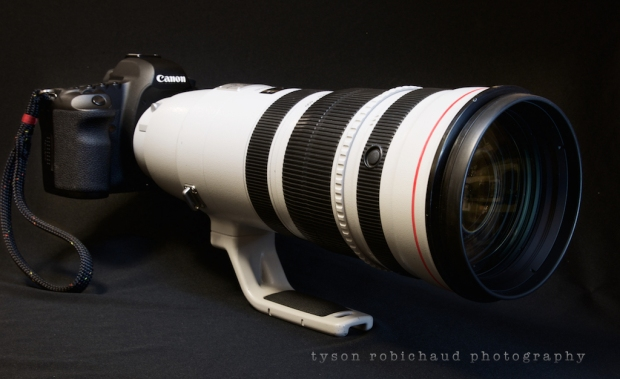 Canon EF 200-400mm f/4 L IS USM on 5Dii